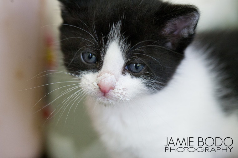4 week old kittens Jamie Bodo Photo