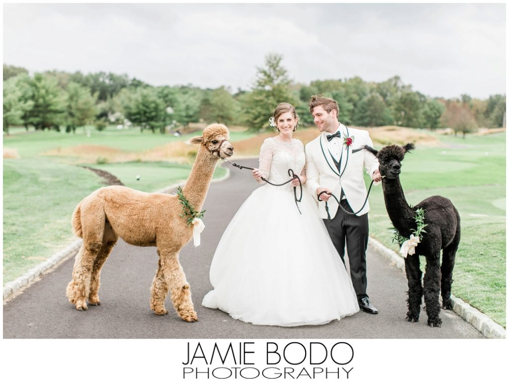 Alpacas Eagle Oaks Country Club Wedding